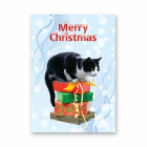cat (black and white) Christmas card